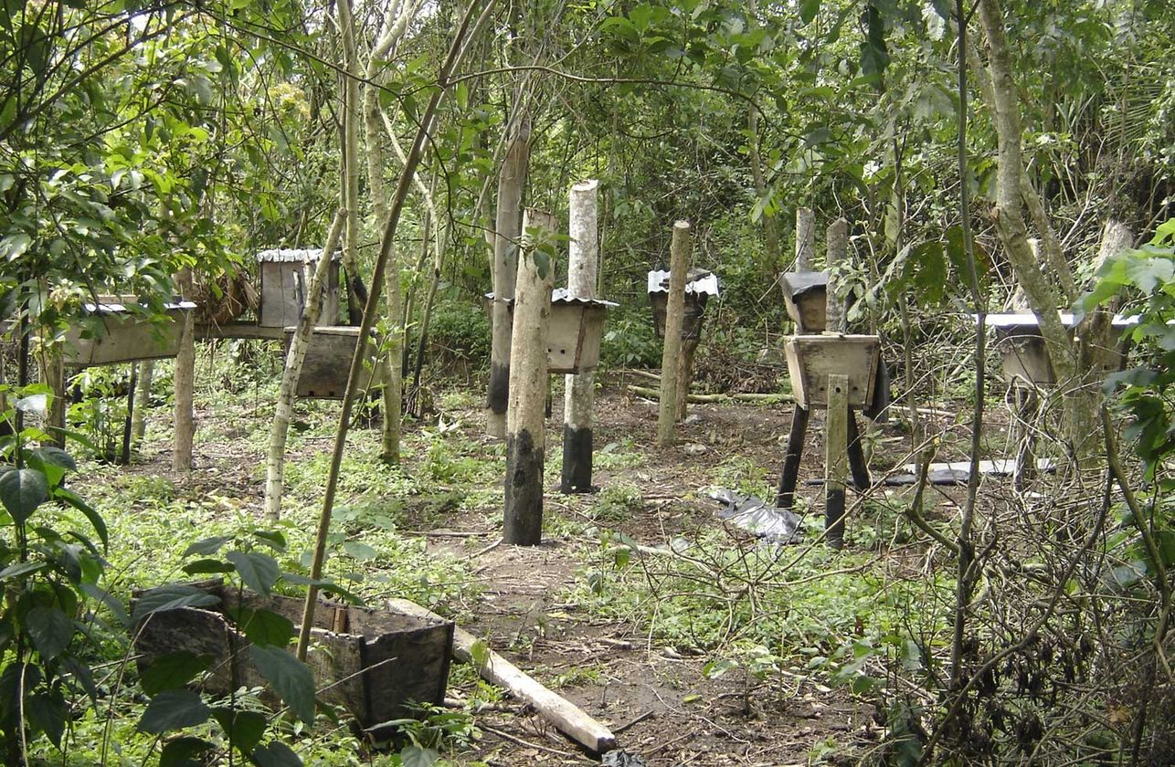 Small-Scale Farmers Reforest Forests – myclimate